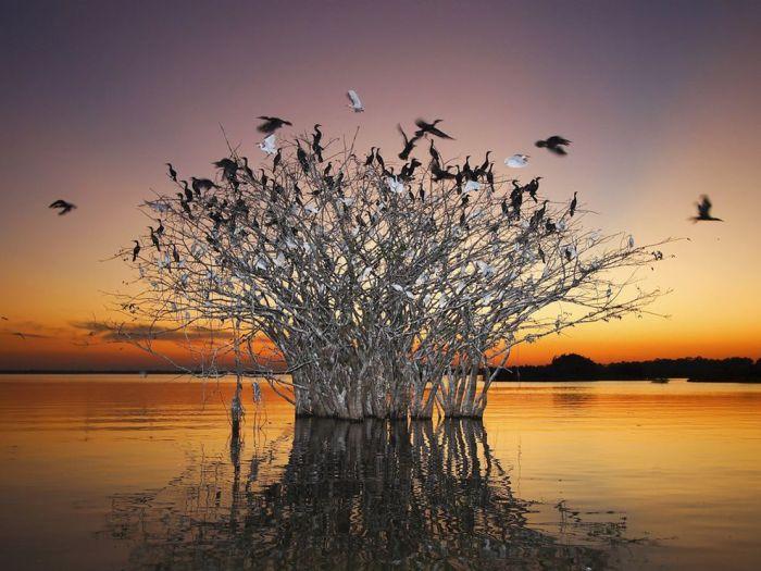 pantanal-birds-brazil_19477_990x742